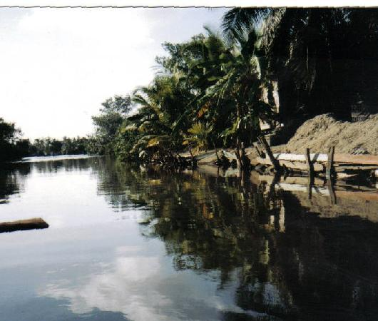 ฮอนดูรัส: Riverbank near Puerto Cortes, Honduras.