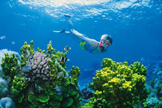 Great Barrier Reef, Australia: Snorkelling