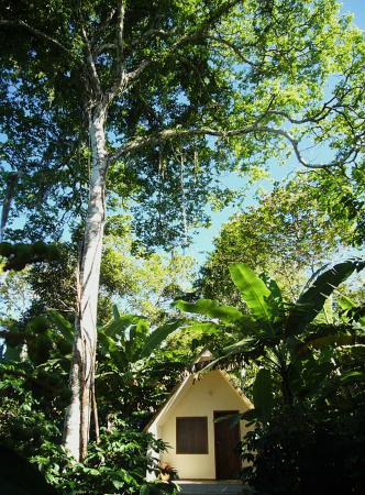 Sitio do Alemao: Chalet below a jatobá tree