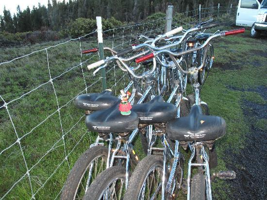 Paia, Χαβάη: Bikes