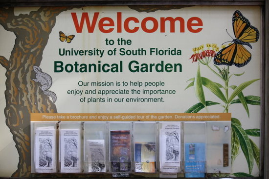 University Of South Florida Botanical Gardens, Tampa: Beautiful Plants And  Things At The USF