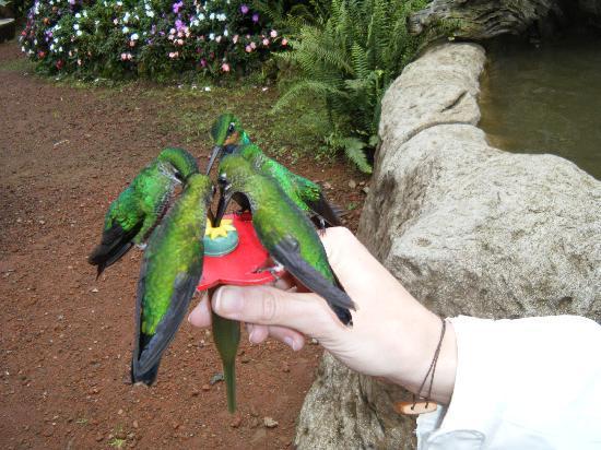 Peace Lodge: feeding the hummingbirds