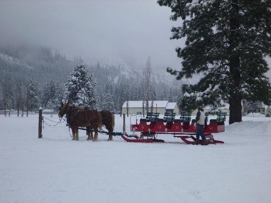 Icicle Outfitters Winter Sleigh Ride : Our Sleigh