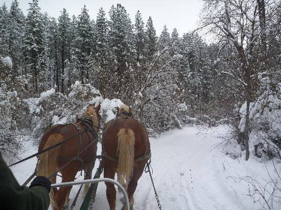 Icicle Outfitters Winter Sleigh Ride : Through the woods