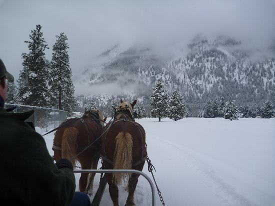 Icicle Outfitters Winter Sleigh Ride : Next to the Icicle River