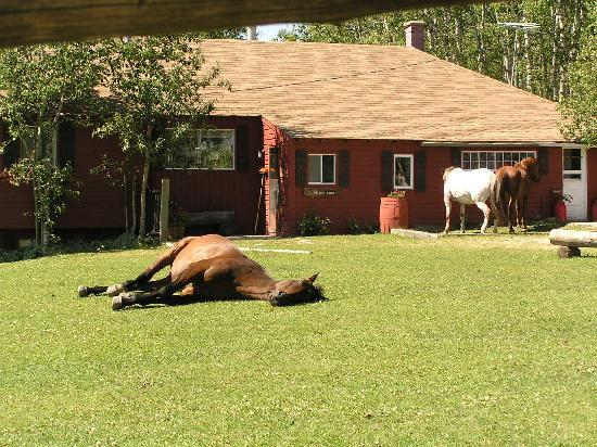 Homeplace Ranch: The lodge