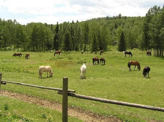 Homeplace Ranch: A few of the horses