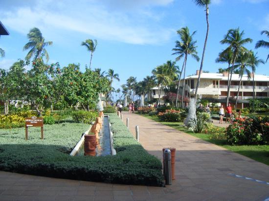 Sirenis Punta Cana Resort Casino & Aquagames: l'allée centrale conduisant à la plage