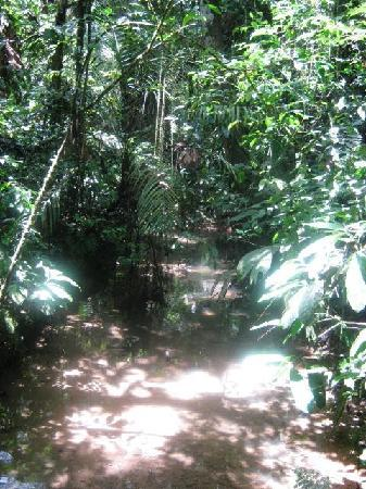 Manatee Amazon Explorer: Hiking in Yasuni National Park