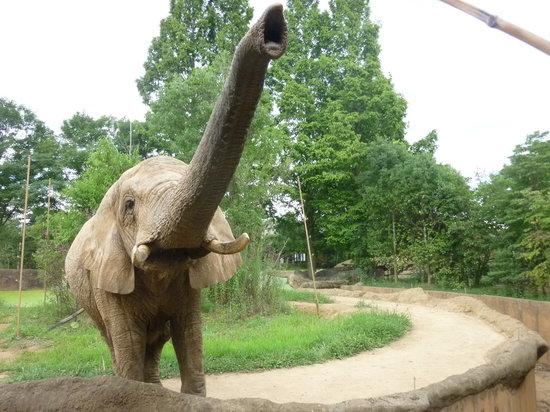 Sendai, Japan: 大きなアフリカ象は、迫力満点!!
