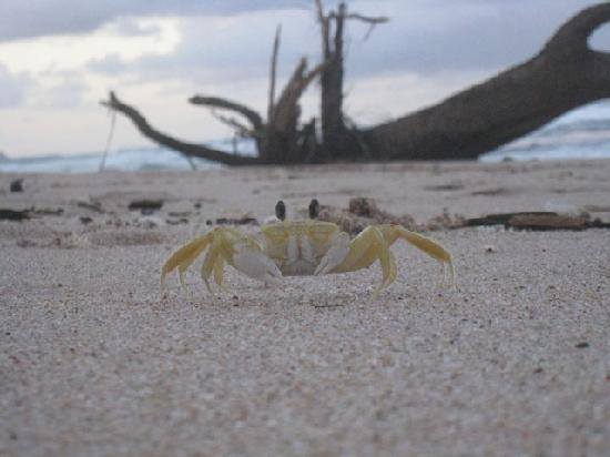Soup Bowl: Crab running along the beach