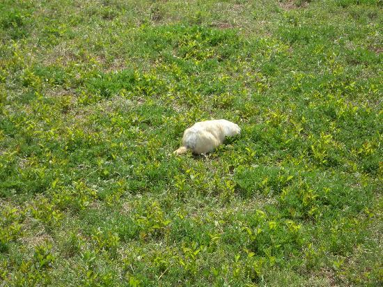 Prairie Homestead Historic Site: the prairie dogs