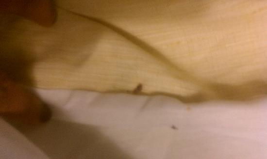 Residence Inn Charlotte University Research Park: bedbugs in between the corners of sheets