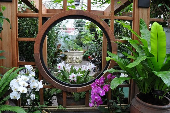 Conservatory of Flowers: Orchideen