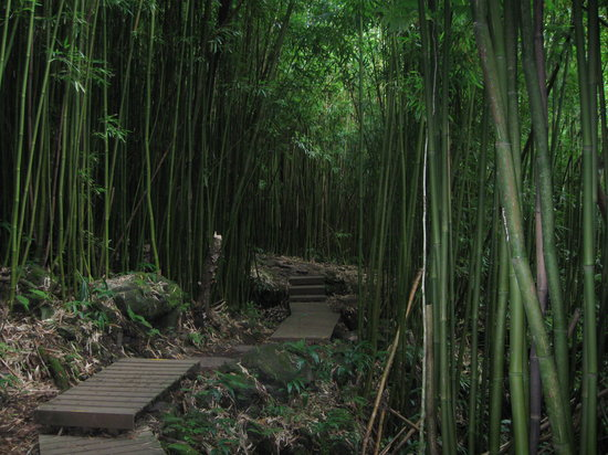 Haleakala National Park, HI: Bamboo forest