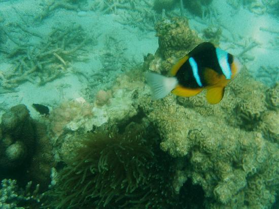 Neptune Pwani Beach Resort & Spa: Nemo à Prison Island !