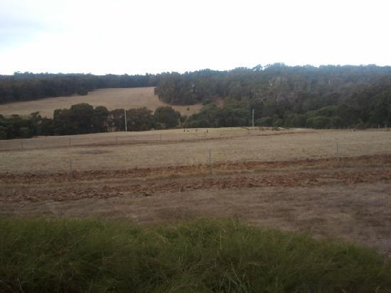 Hilltop Studios Margaret River: View from the room with roos in the field