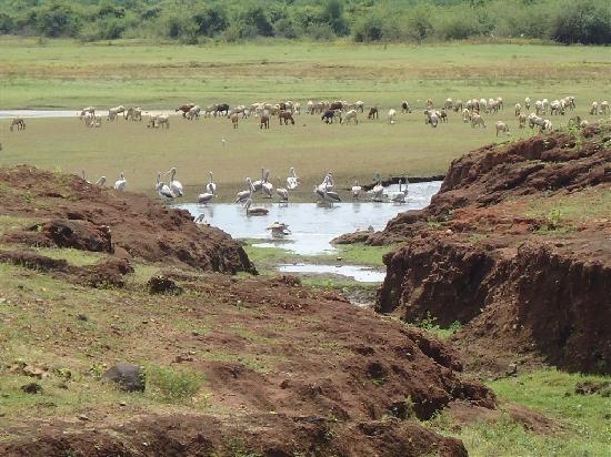 Double Dutch Resort: Kamarajar Lake b\pre-monsoon bird life