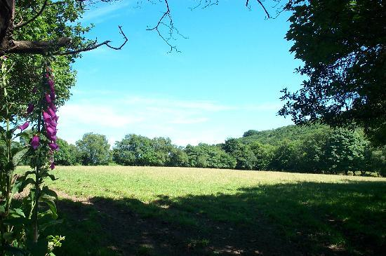 Cilhendre Fawr Farm Cottages: Located in a woodland trust