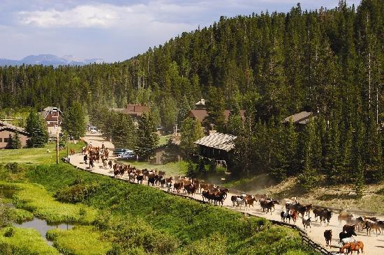C Lazy U Ranch: Rush Hour at the Ranch