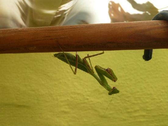 Hotel Lagunita: Animals in my bathroom