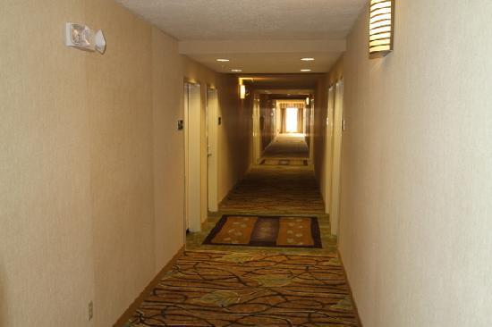 Hampton Inn & Suites Carlsbad: Hall