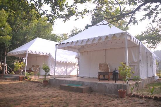 Sher C& & Sher Camp (Ranthambore National Park Rajasthan) - Lodge Reviews ...