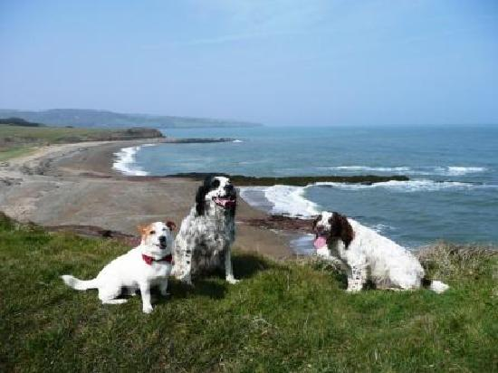 Moelfre, UK: Dogs welcome at Lligwy Beach
