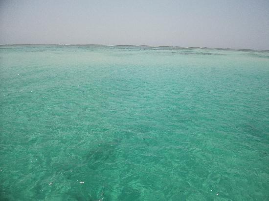 Watamu, Kenya: sardinia 2 sea