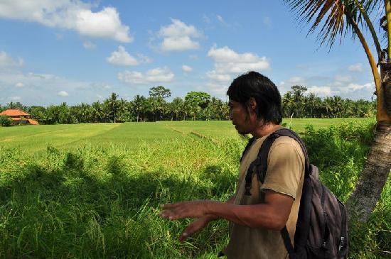 Bali Nature Herbal Walks: bali herbal walk