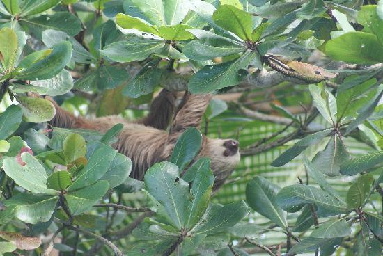 Casa Faya Lobi: Sloth in the Tree Out Front