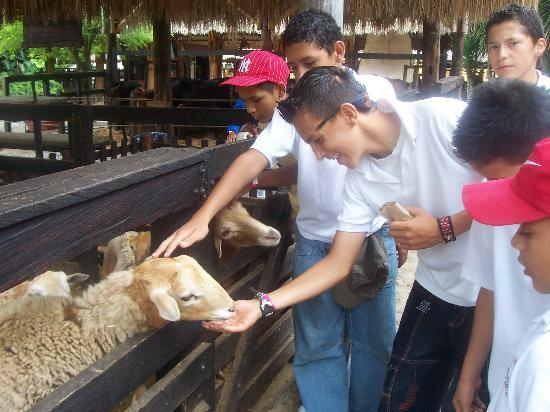 Quimbaya, Colombia: School kids playing with animals