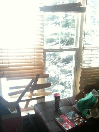 Walk To Nationals Bed & Breakfast: One of the aninals attacked the blinds