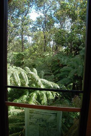 Treehouse Skye: 窓から