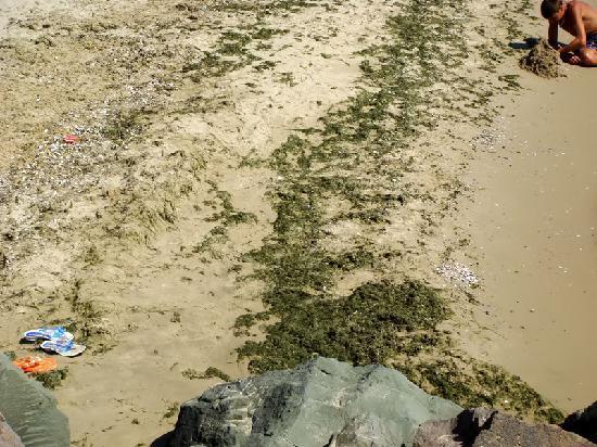 Emerald Beach Resort & Spa: Fie!