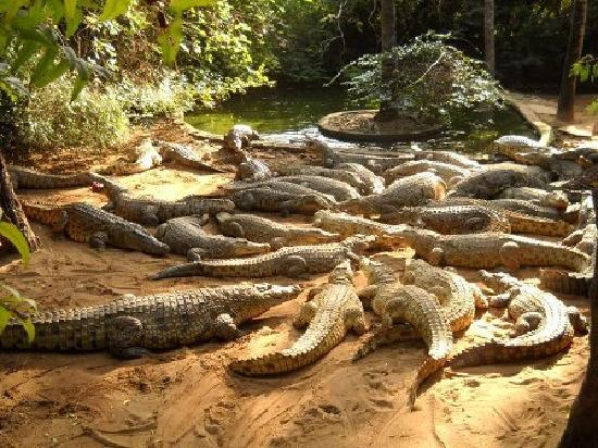 Kenga Giama Resort: Visit the Crocodile Farm opp. the Resort