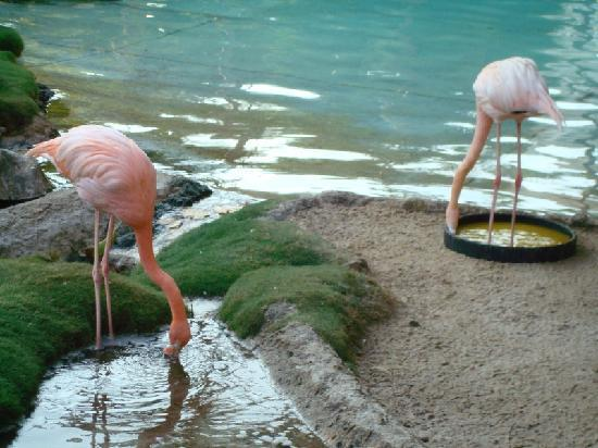 Princess Mundo Imperial: flamingos, ducks and a parrot are on site