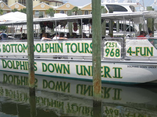 Gl Bottom Dolphin Tours The Boat