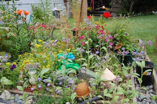 Walkabout Town B&B: Enjoy viewing our many lovely flowers in our garden.