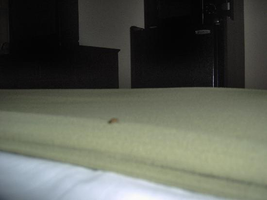 Holiday Inn Express in Wilkesboro: Roach on the bed sheets. Picture came out blurry as it kept moving.