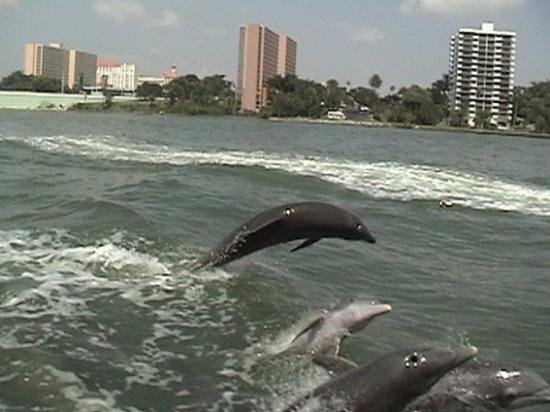 Classic Cruises: our dolphin encounter