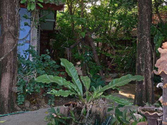 Sukhothai Guest House: Blick von der Terrasse