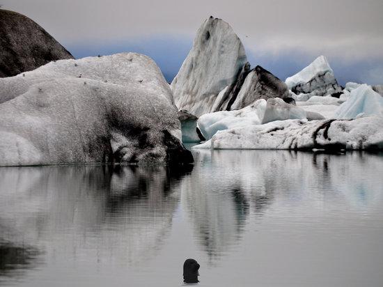 A Jokulsarlon Seal