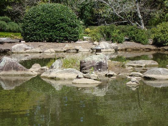 Birmingham Botanical Gardens: turtles in the japanese garden