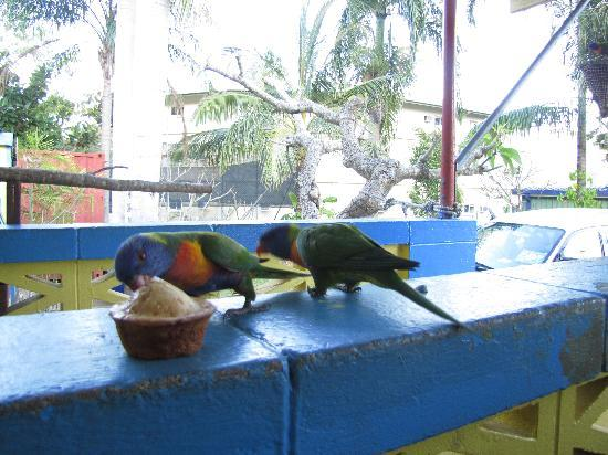 Bush Village Budget Cabins: The birds like the muffins too :)