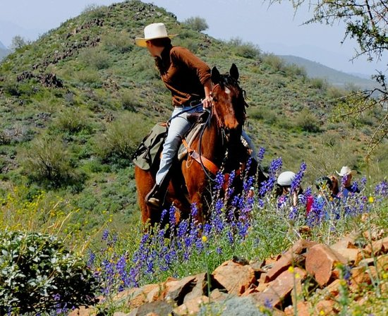Cave Creek Trail Rides: A beautiful spring ride!