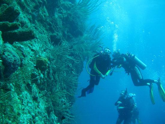 Ocean Encounters Diving: wall
