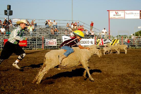 Mutton-busting at the rodeo. Helena, Montana