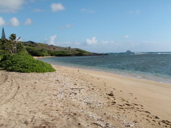 Waialua beach