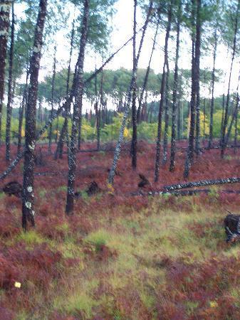 Parentis-en-Born, Francia: couleurs d'automne à Parentis